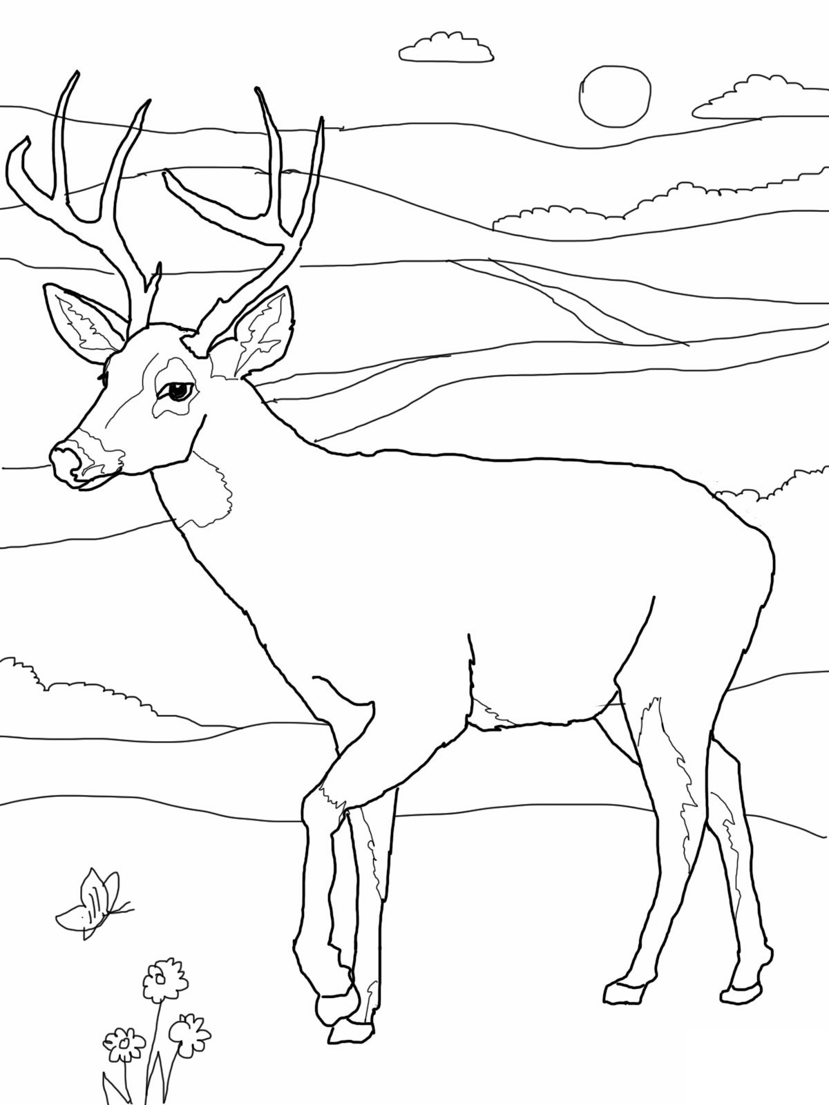 deer color pages print download deer coloring pages for totally color pages deer