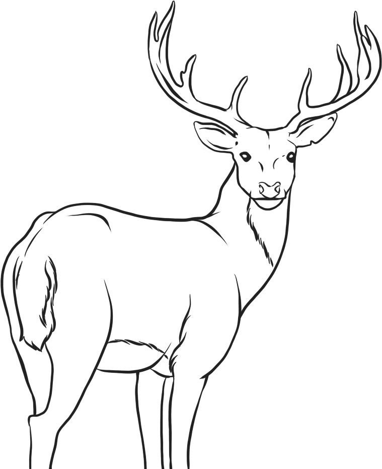 deer color pages printable coloring pages for adults 15 free designs deer pages color