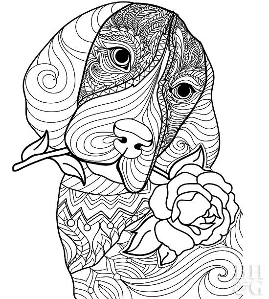 dog head coloring pages bulldog face coloring pages head dog coloring pages