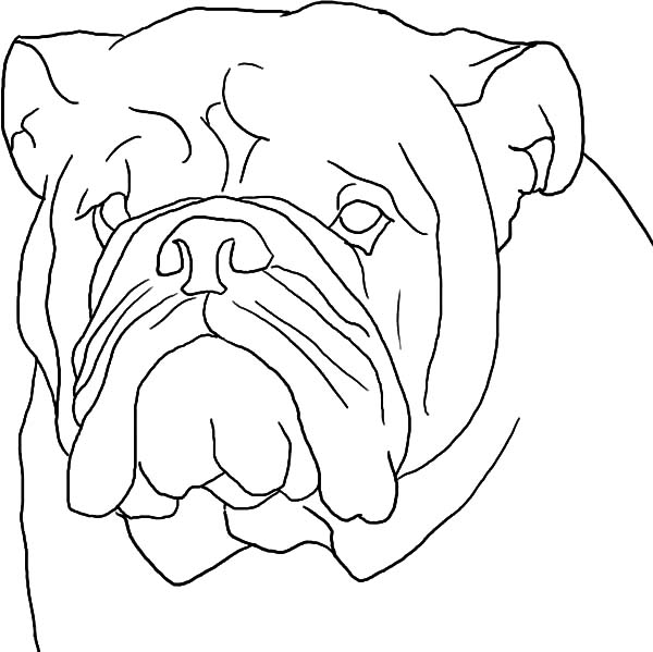 dog head coloring pages free dog coloring pages head dog coloring pages