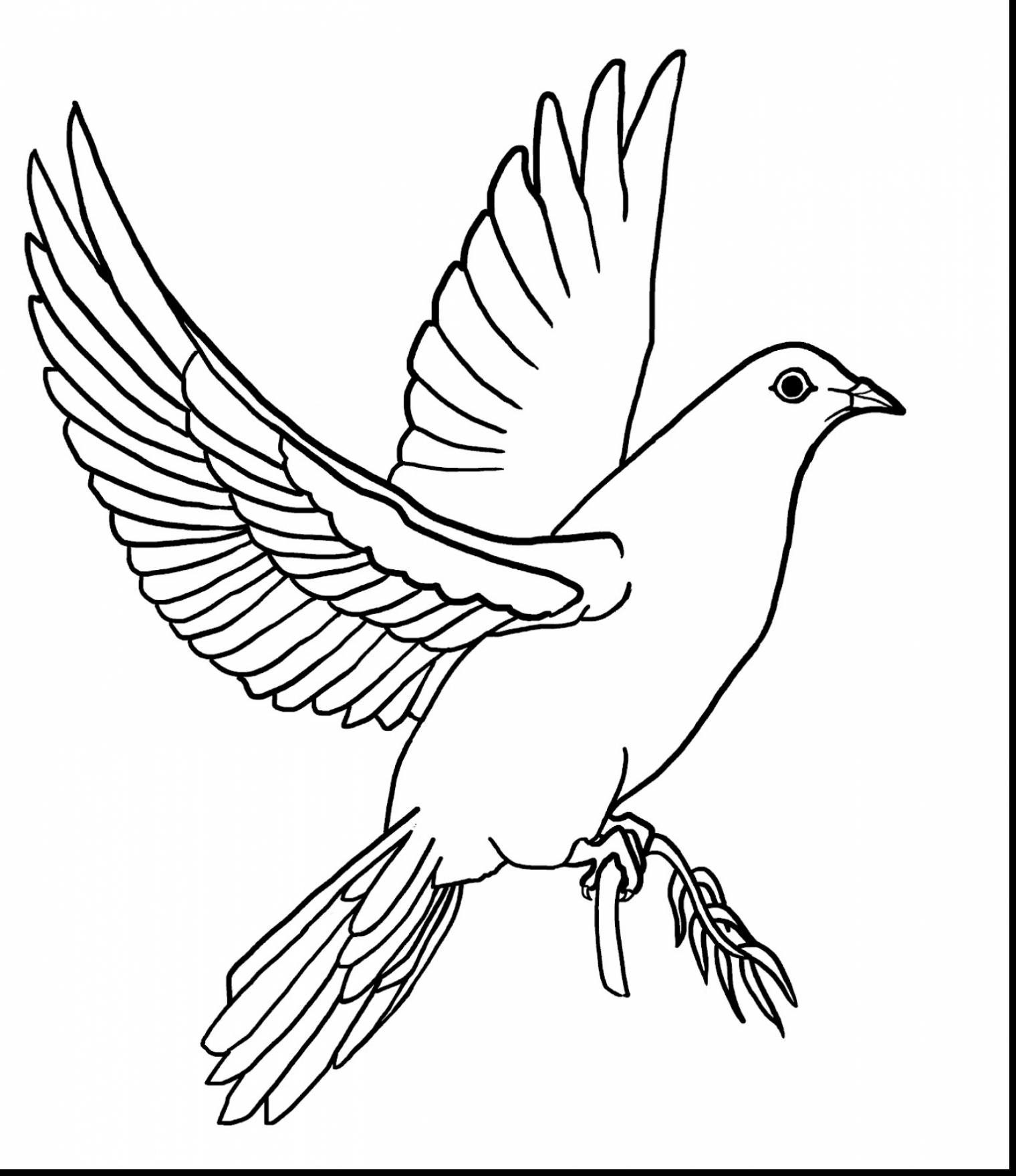 dove bird coloring pages collared dove coloring page free printable coloring pages pages bird dove coloring