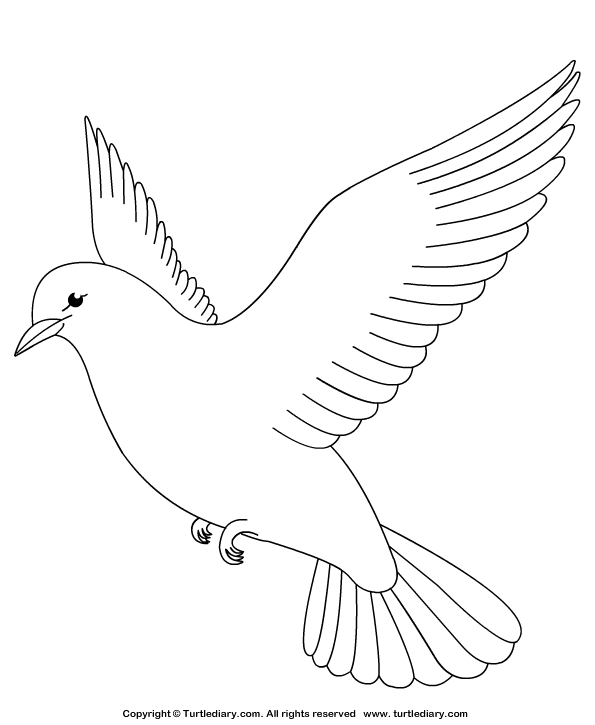 dove bird coloring pages dove bird drawing at getdrawings free download pages coloring dove bird