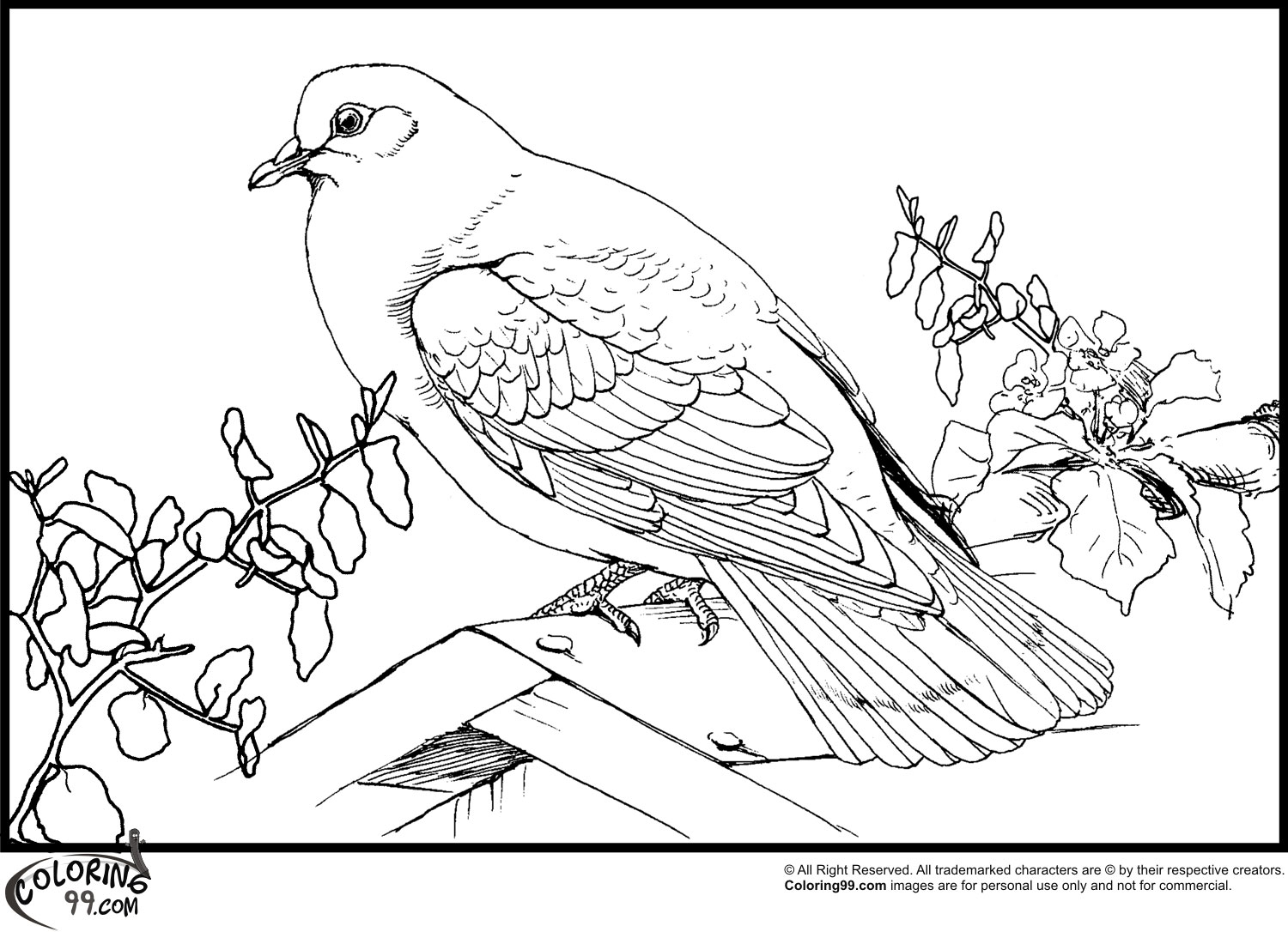 dove bird coloring pages dove coloring pages download and print dove coloring pages dove bird coloring pages