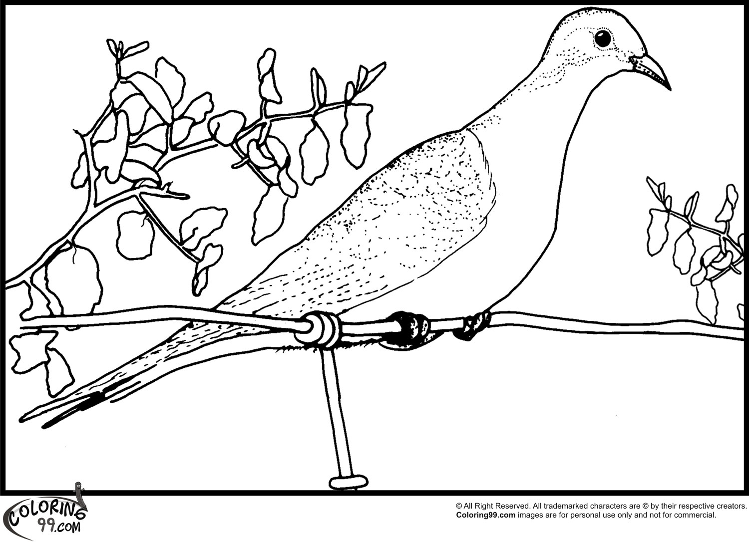 dove bird coloring pages dove coloring pages team colors dove coloring bird pages