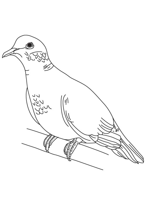 dove bird coloring pages dove outline coloring coloring pages coloring bird pages dove