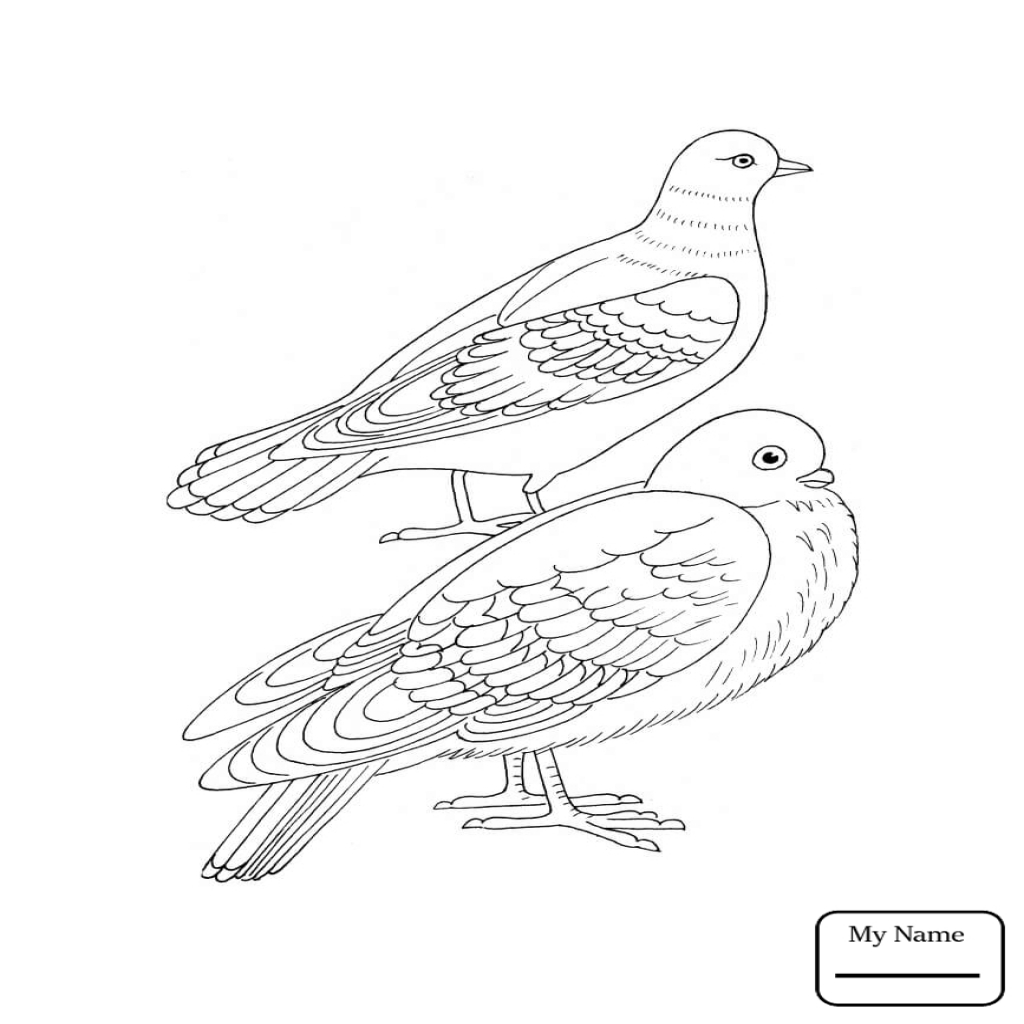 dove bird coloring pages mourningdoveinkjpg 12751650 bird coloring pages coloring bird dove pages