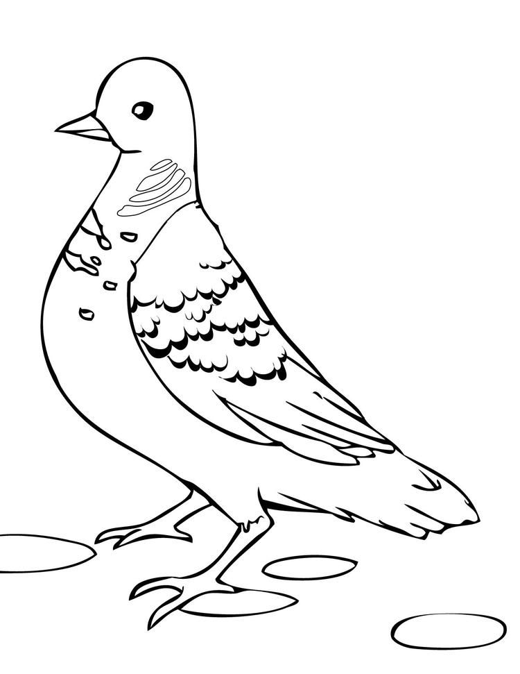 dove bird coloring pages peace dove with olive branch coloring page dove with pages bird coloring dove