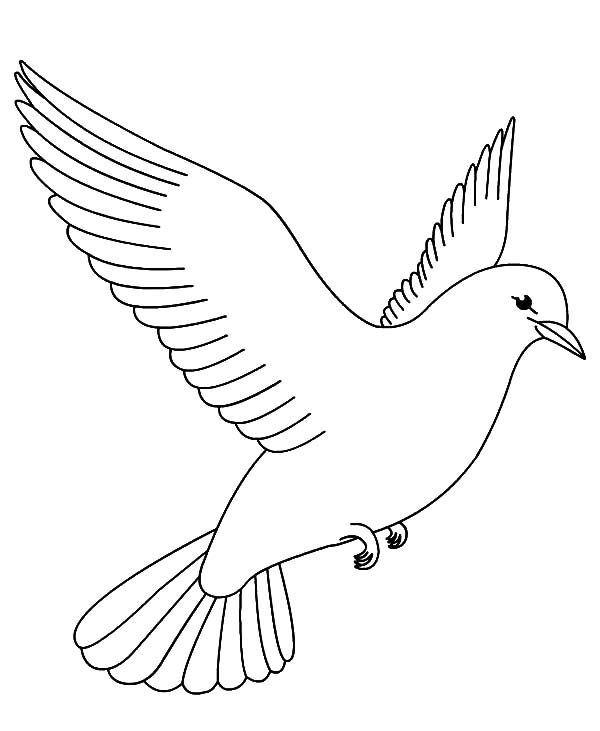 dove bird coloring pages turtle dove drawing at getdrawings free download coloring bird dove pages