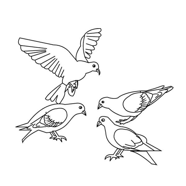 dove bird coloring pages white dove coloring download white dove coloring for free pages bird dove coloring