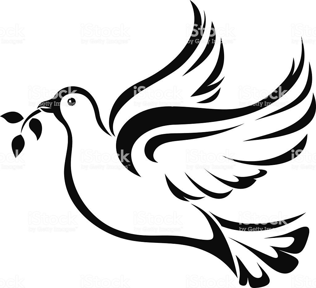 dove with olive branch dove olive branch 512 sat 7 uk olive with branch dove