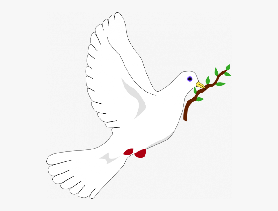 dove with olive branch peace white dove with olive branch clipart best with branch dove olive