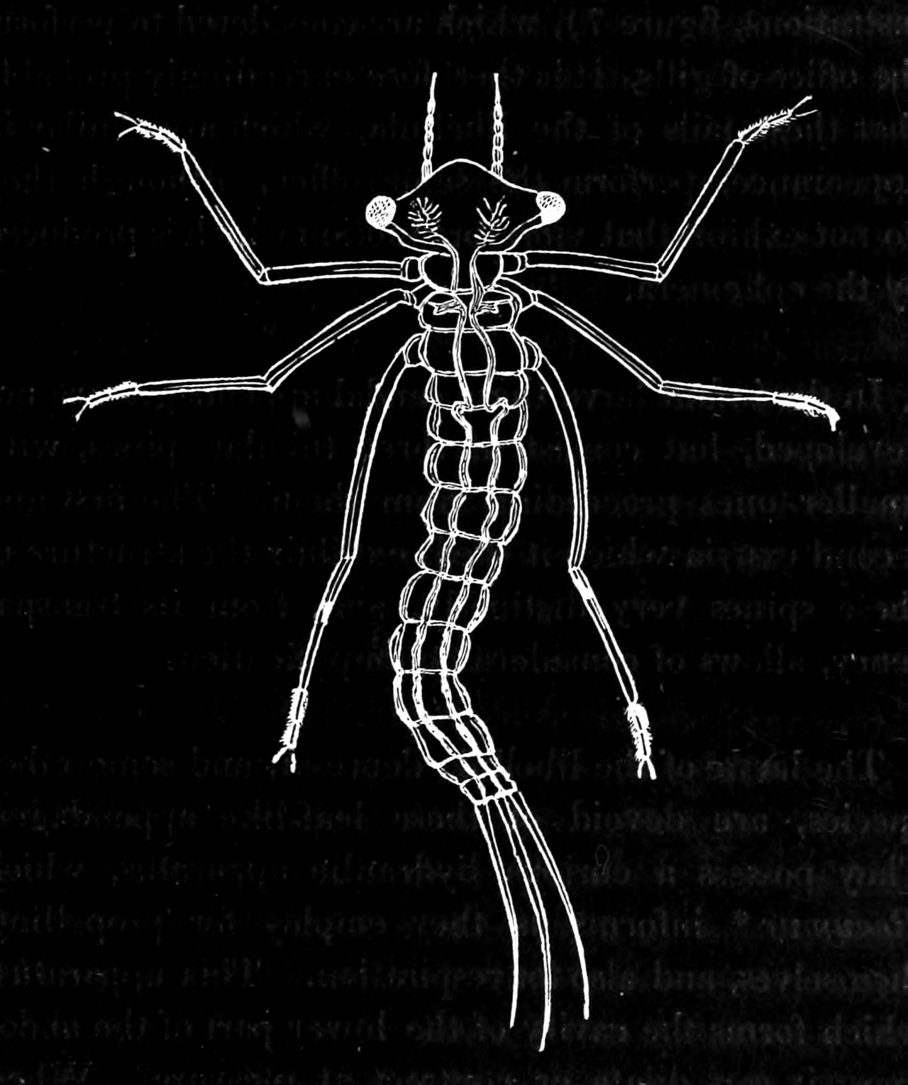 dragonfly larvae pdf biogeography of dragonflies and damselflies the dragonfly larvae