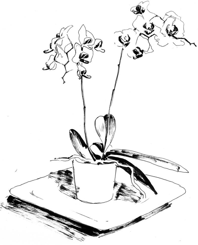 draw an orchid flowers drawing images pencil sketches colorful arts an draw orchid