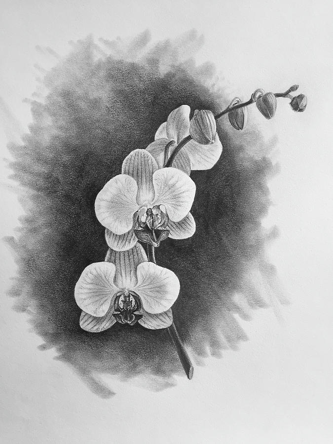 draw an orchid gousicteco orchid drawing easy images draw orchid an 1 1