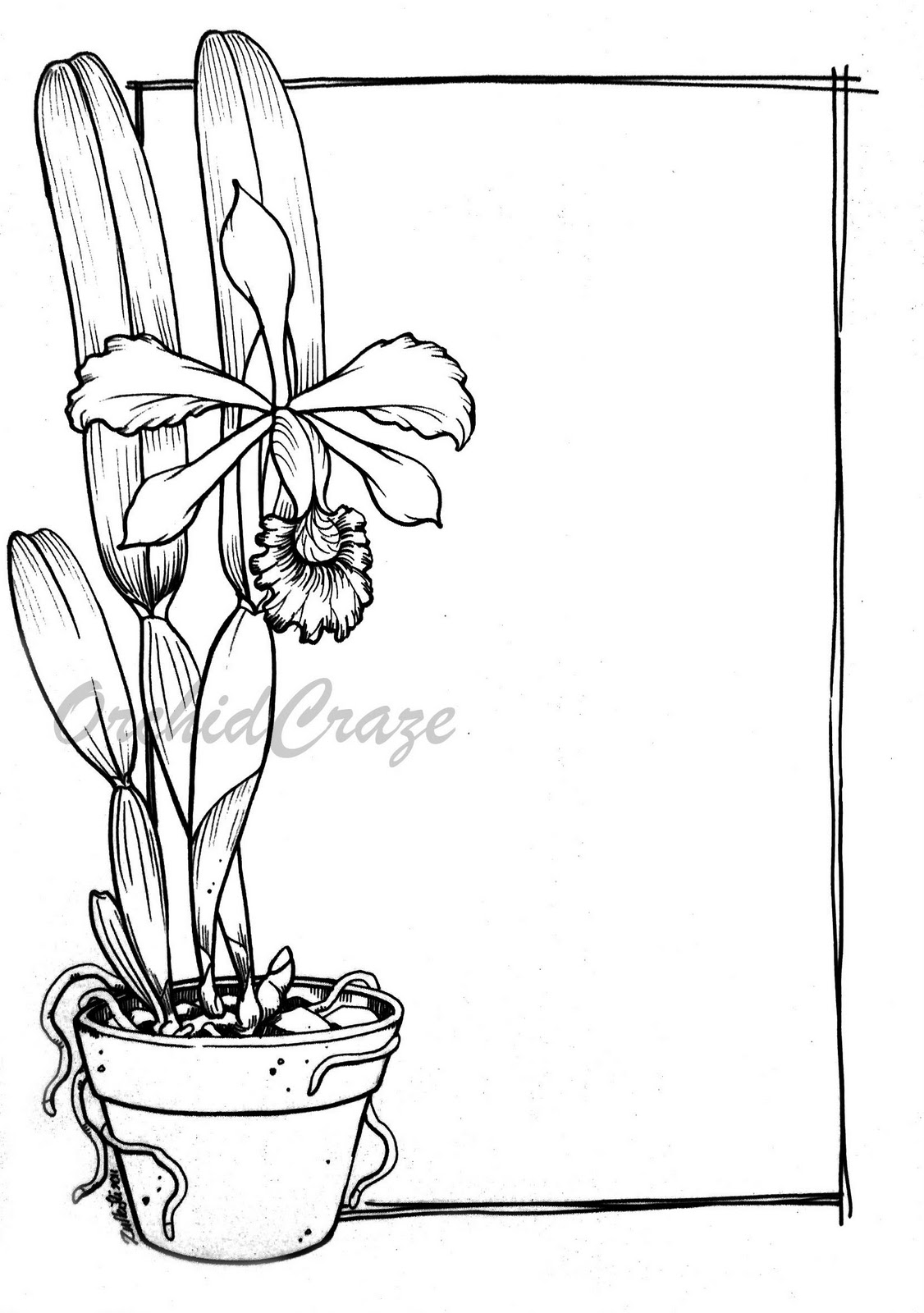 draw an orchid how to draw a beautiful orchid really easy drawing tutorial an draw orchid