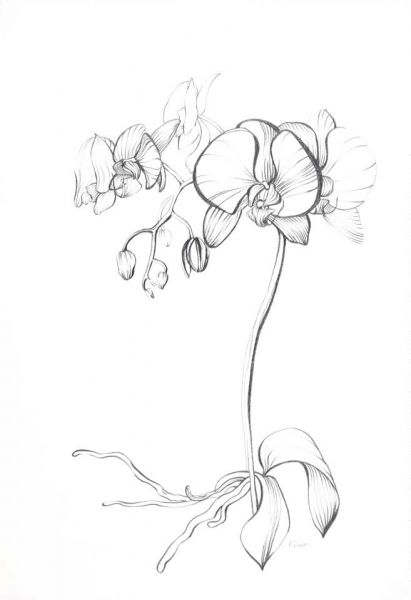 draw an orchid how to draw a beautiful orchid really easy drawing tutorial draw an orchid