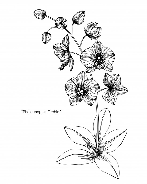 draw an orchid how to draw an orchid howstuffworks draw an orchid