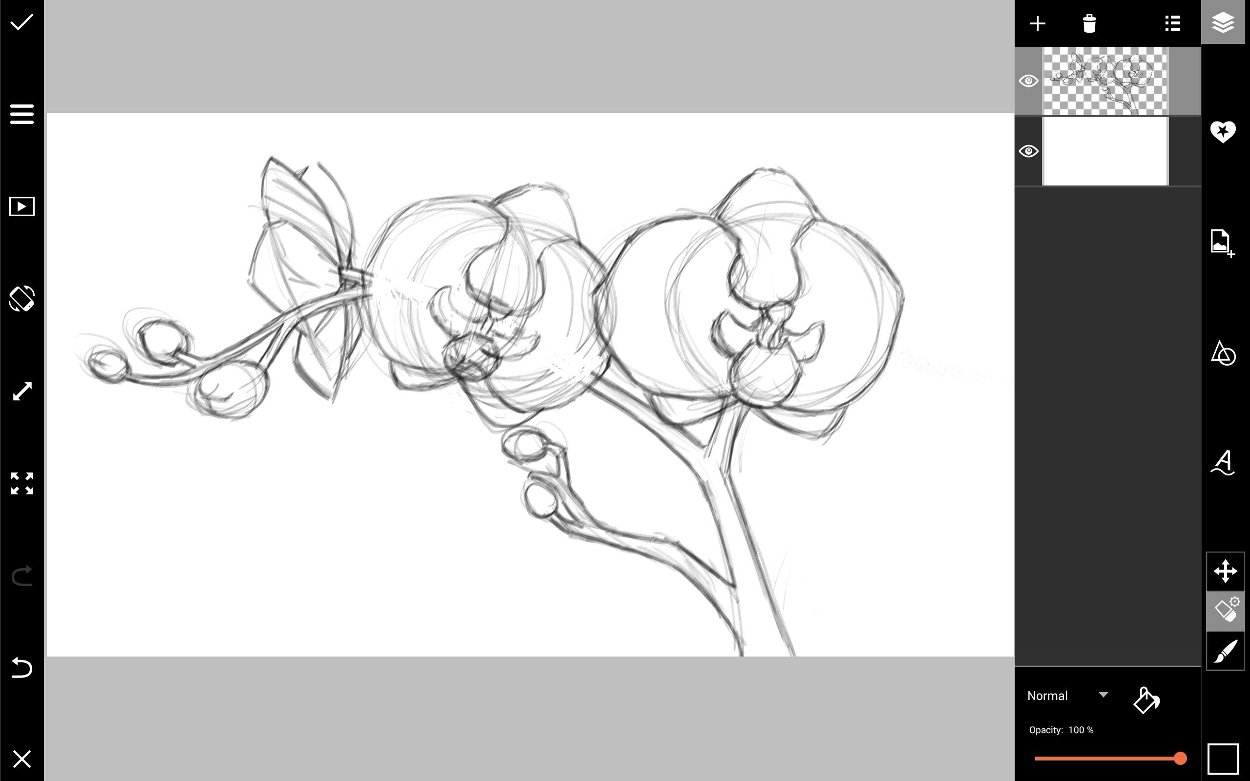 draw an orchid how to draw an orchid with pastel pencils an orchid draw