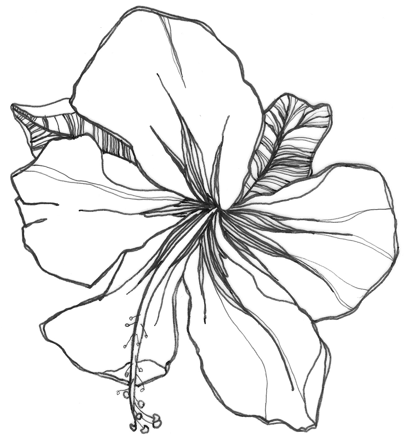 draw an orchid orchid drawing free download on clipartmag an orchid draw