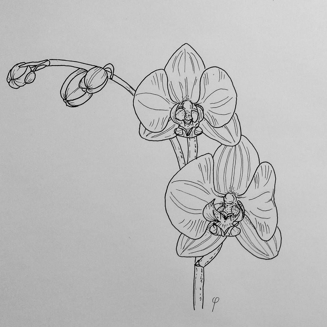 draw an orchid orchid flower sketch at paintingvalleycom explore draw orchid an