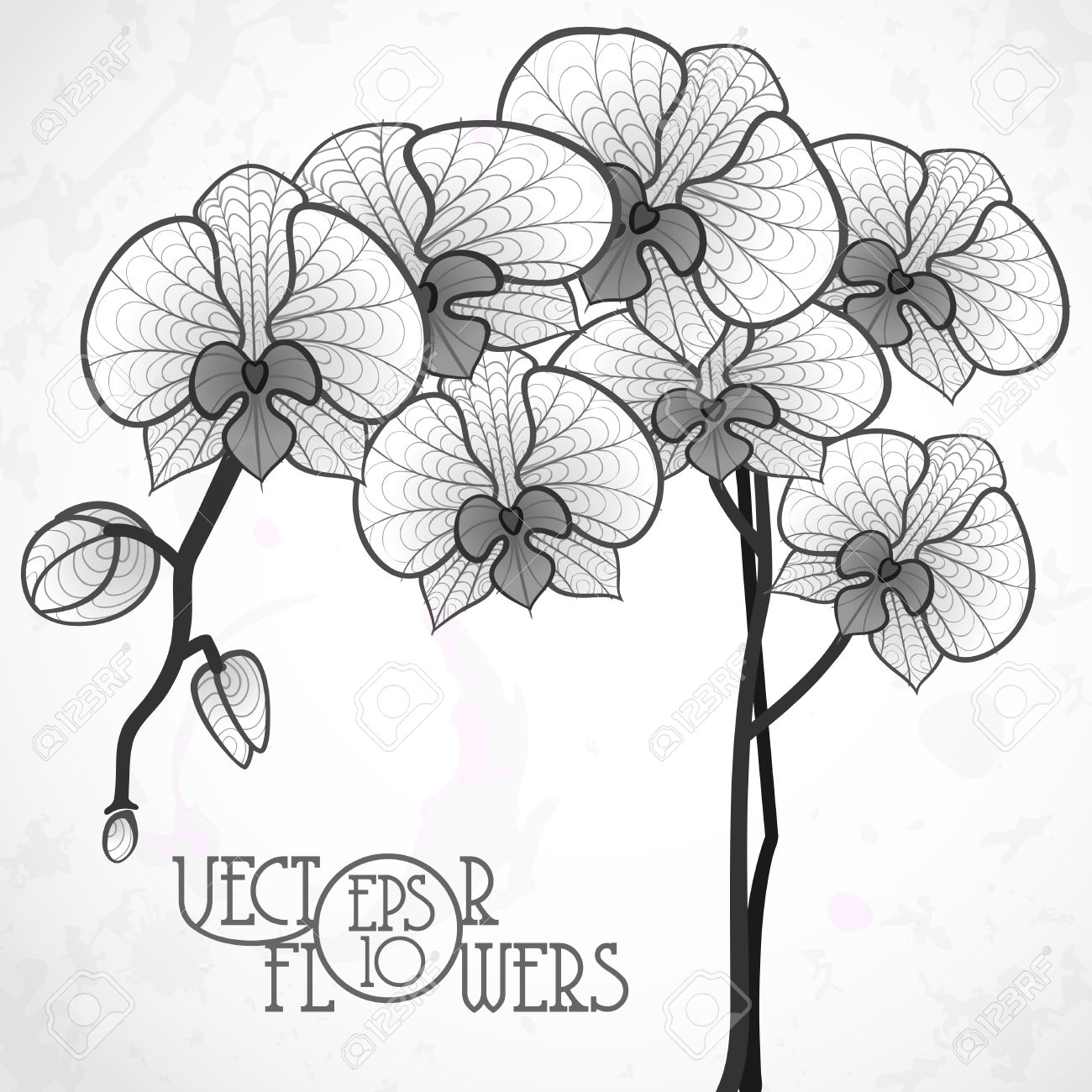 draw an orchid orchid line drawing at getdrawings free download draw orchid an