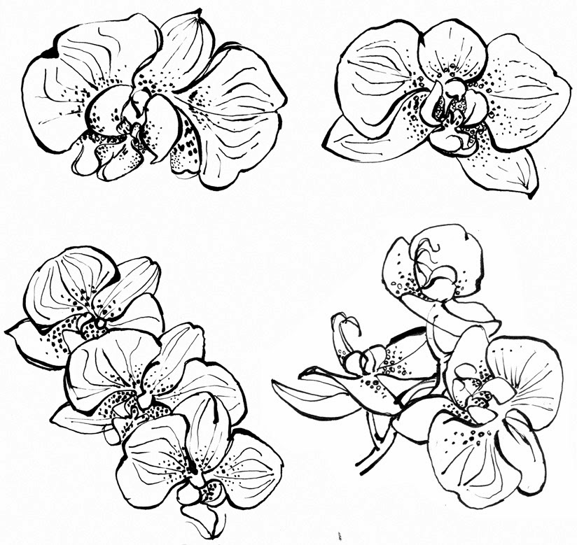 draw an orchid orchid pencil sketches at paintingvalleycom explore draw orchid an