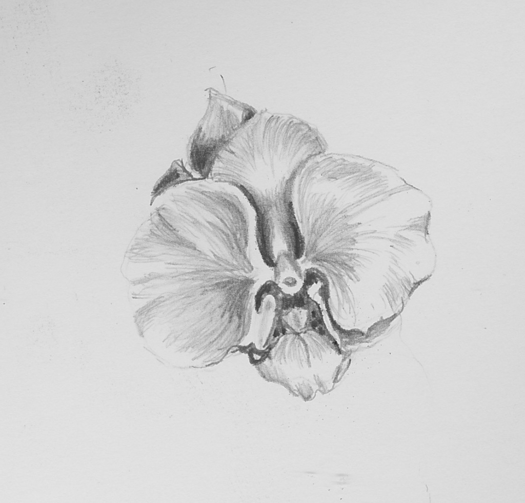 draw an orchid orchid sketch orchid sketch by pktommy on deviantart draw an orchid