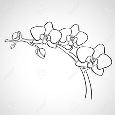draw an orchid orchid with images kresby malování květiny an draw orchid