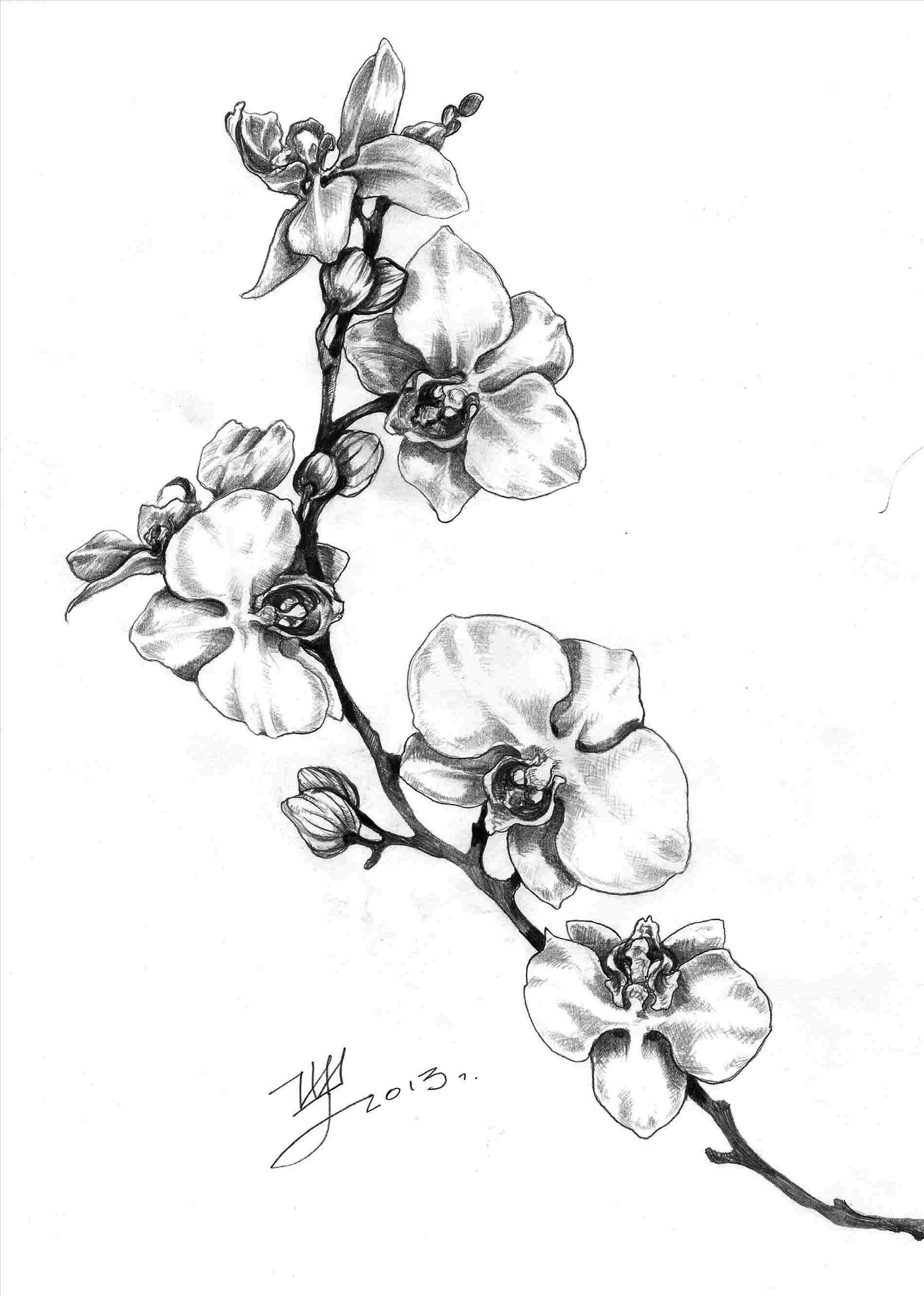 draw an orchid orchids orchid flower tattoos orchid drawing orchid tattoo an draw orchid