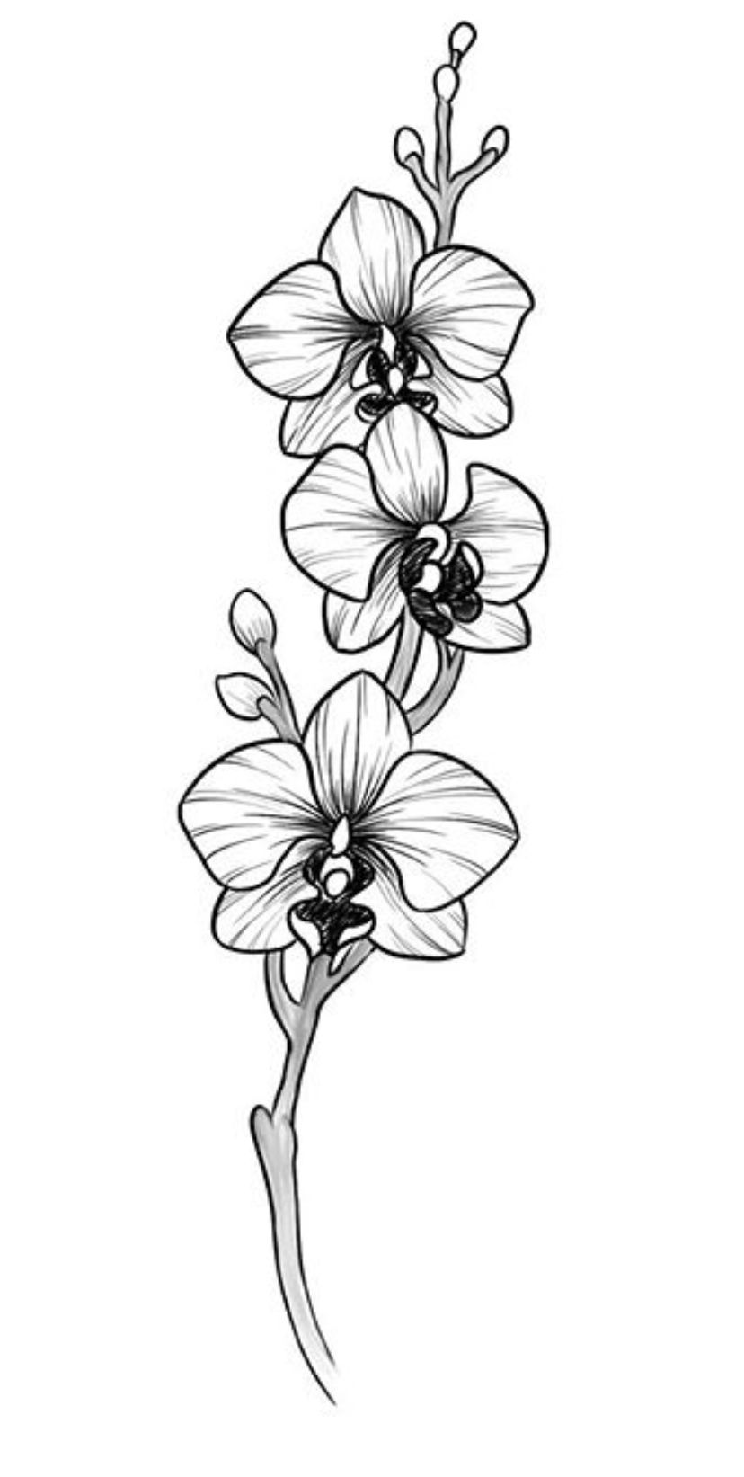 draw an orchid royalty free orchid clip art vector images draw an orchid