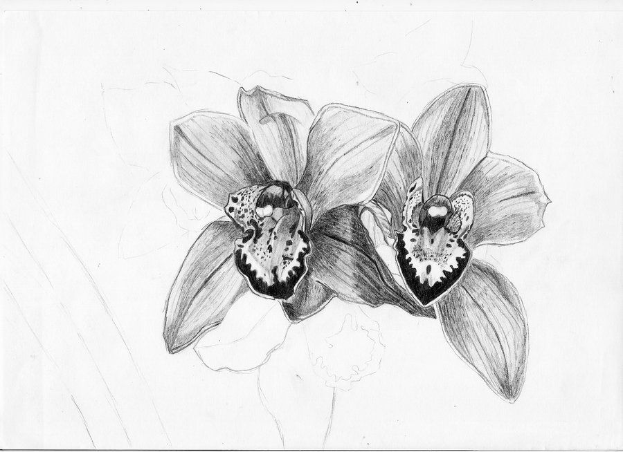draw an orchid simple orchid drawing at getdrawings free download draw an orchid