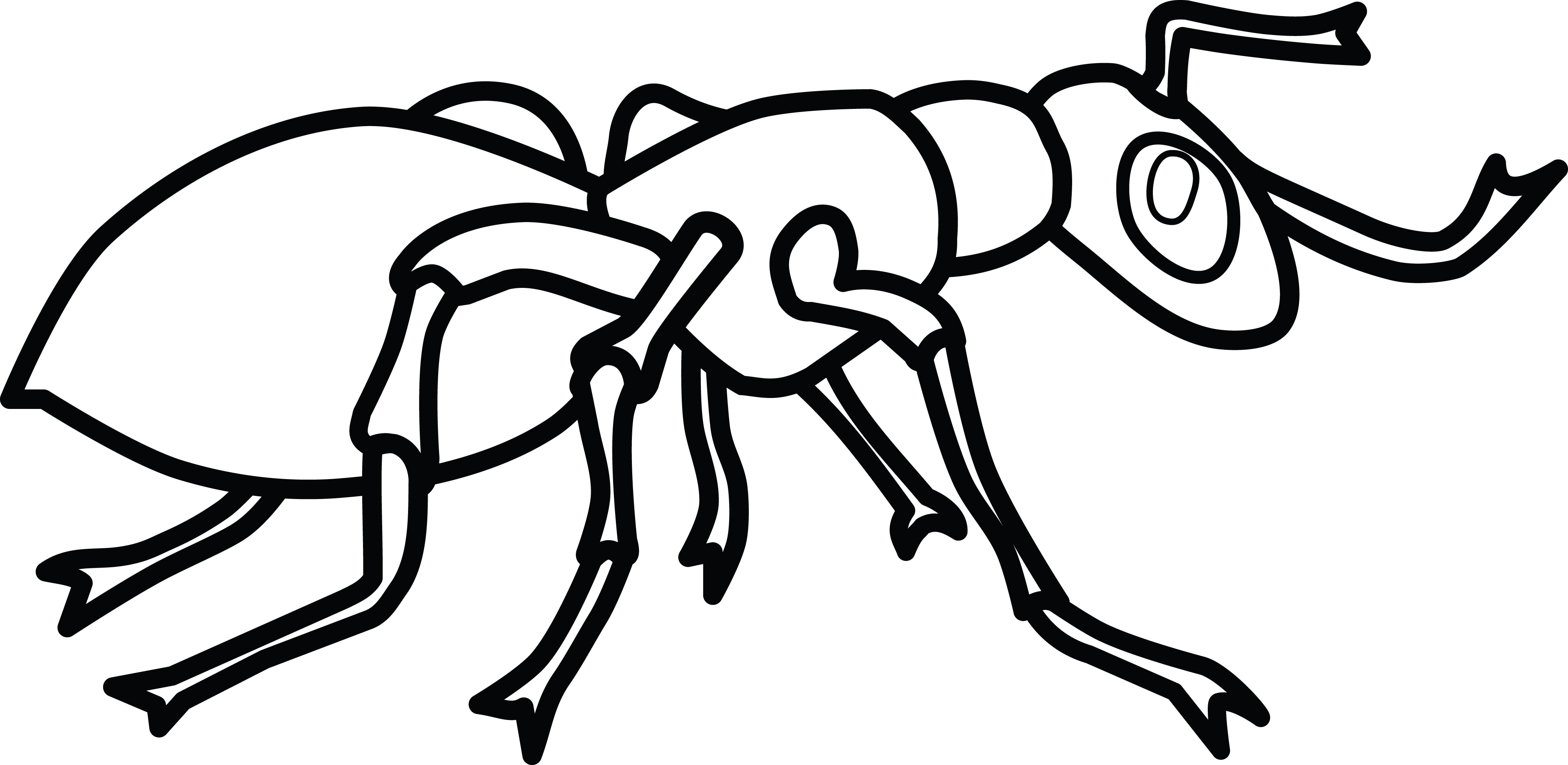 drawing of an ant ant 3 black white line art svg clipart best clipart best ant an of drawing
