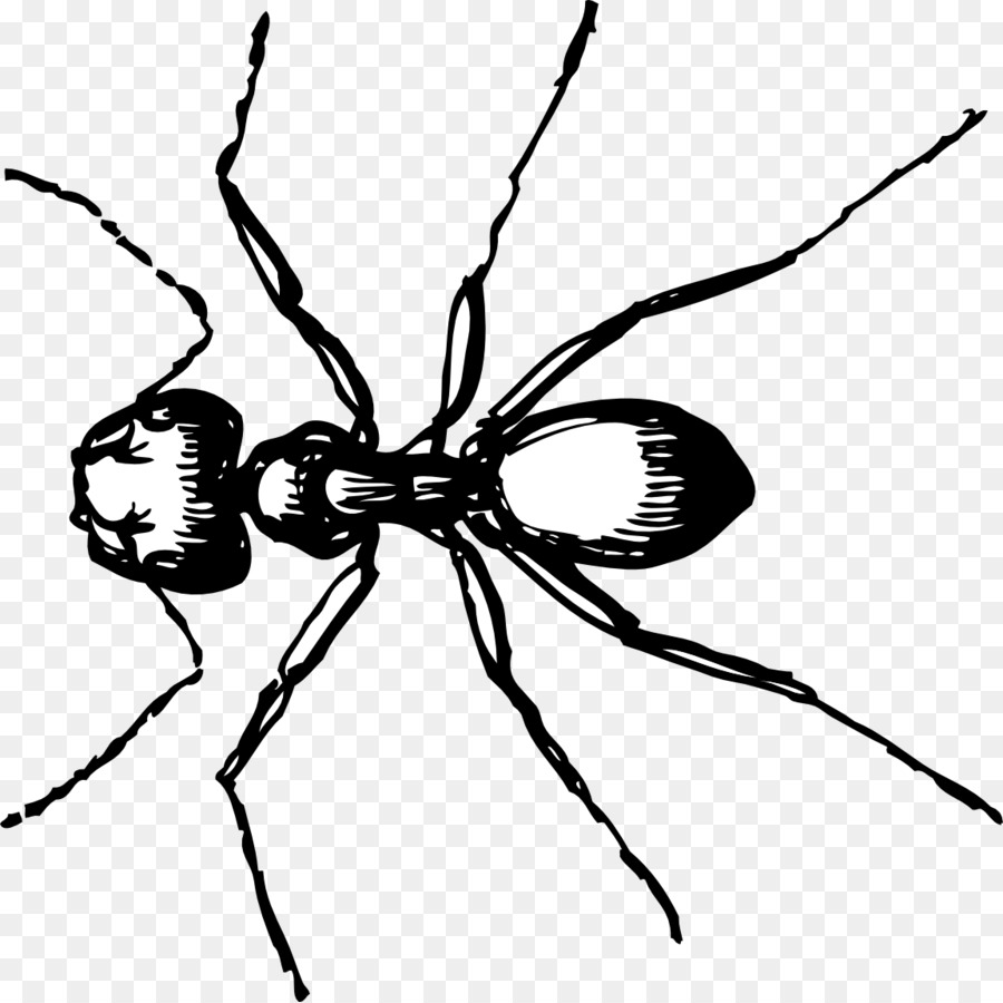drawing of an ant ant clipart line drawing ant line drawing transparent ant an of drawing