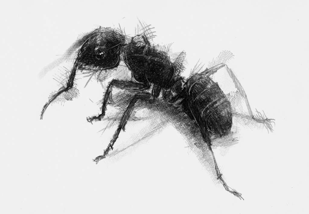 drawing of an ant ant drawing for kids clipartsco of an drawing ant