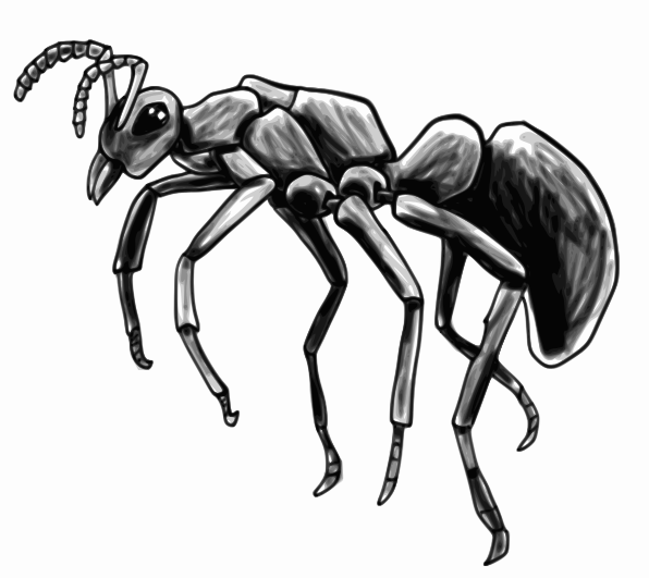 drawing of an ant ant profile sketch animalsbugsantant3antprofile drawing of an ant