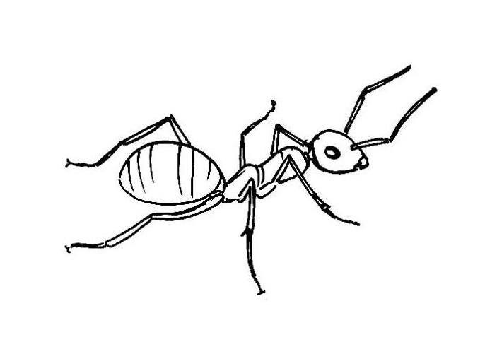 drawing of an ant ant seanbriggs drawing ant of an