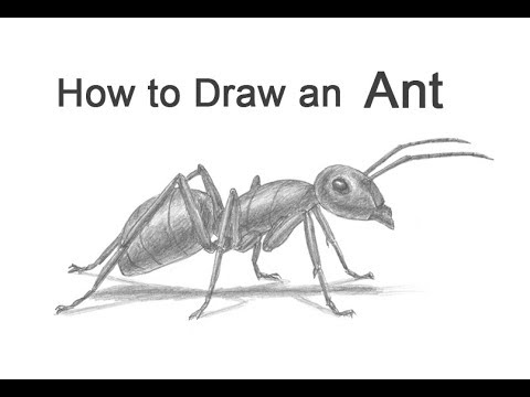 drawing of an ant black ant by yuminette on deviantart an ant drawing of