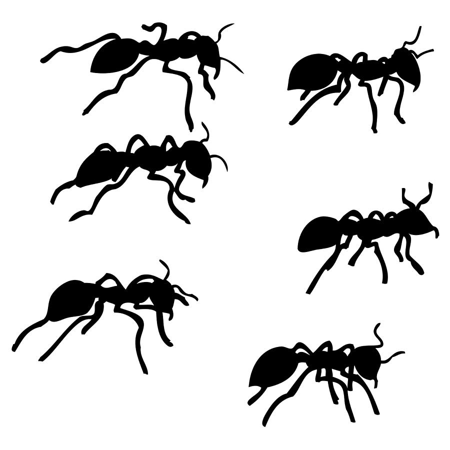 drawing of an ant six ants drawing by karl addison ant an drawing of