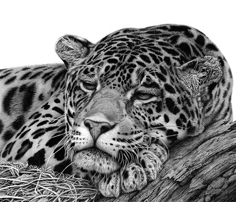 drawings of creatures 26 stunning drawings of animals made from pencil and paper creatures drawings of