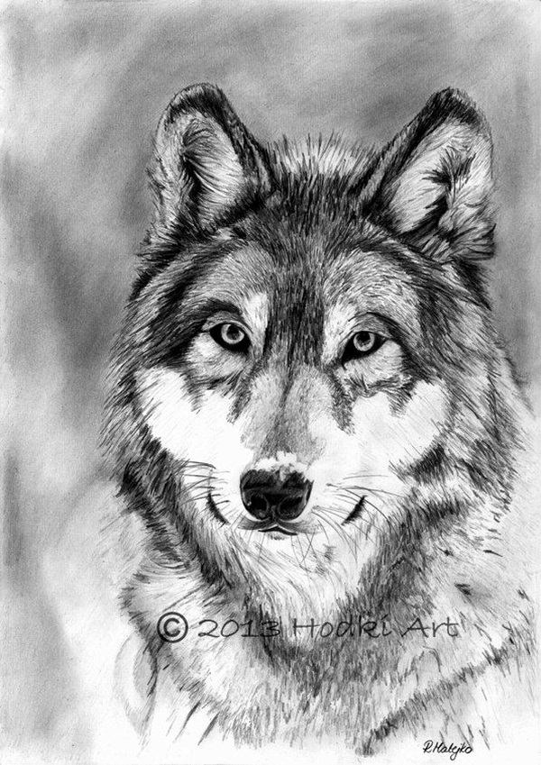 drawings of creatures 40 beautiful and realistic animal sketches for your of creatures drawings