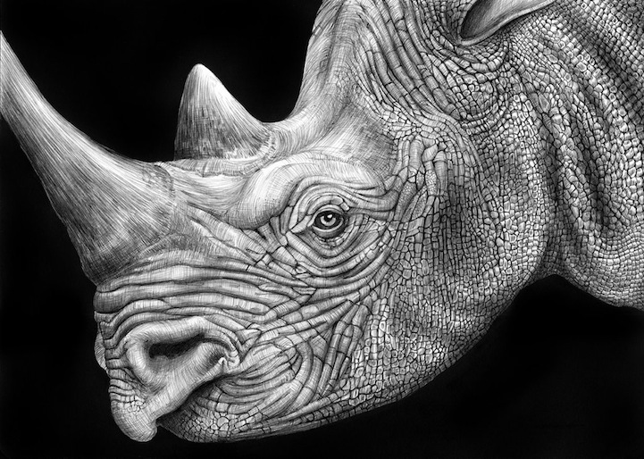 drawings of creatures 40 beautiful and realistic animal sketches for your of drawings creatures