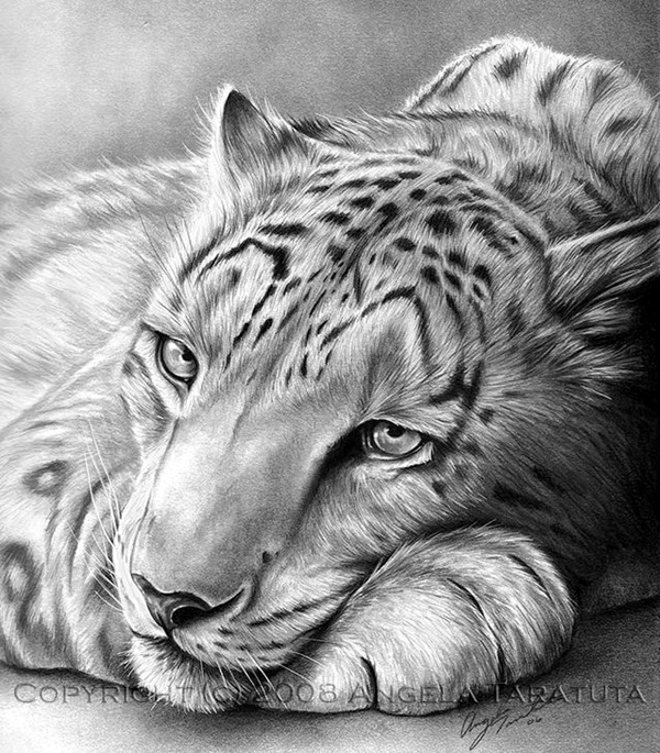 drawings of creatures 40 realistic animal pencil drawings creatures drawings of