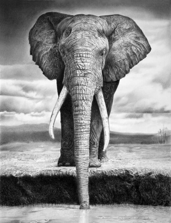 drawings of creatures 40 realistic animal pencil drawings drawings creatures of