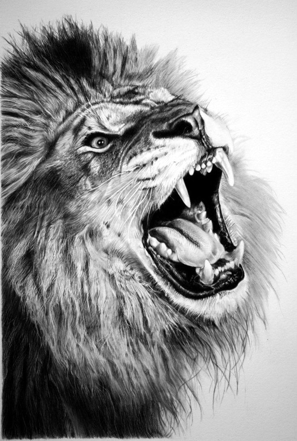 drawings of creatures 40 realistic animal pencil drawings drawings creatures of 1 1
