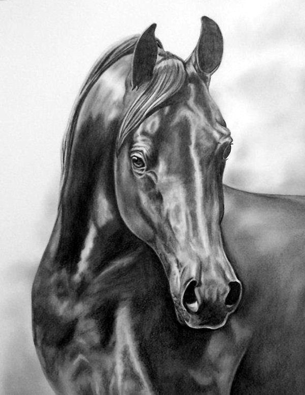drawings of creatures 40 realistic animal pencil drawings drawings creatures of 1 2