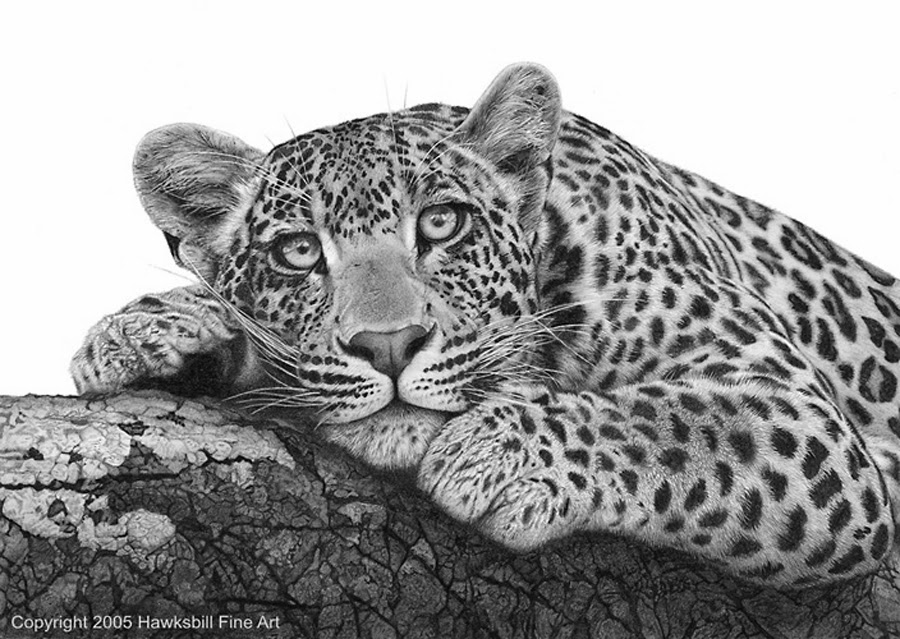 drawings of creatures 40 realistic animal pencil drawings drawings of creatures