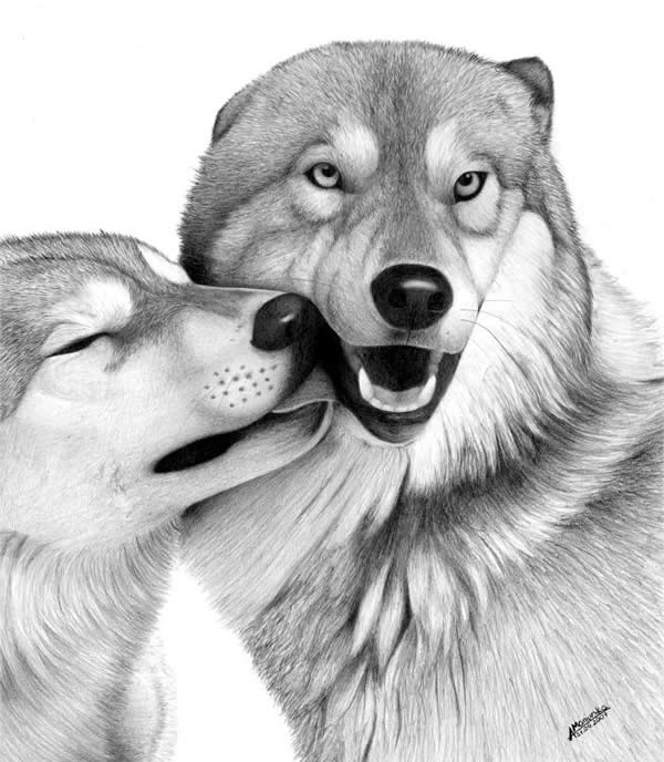 drawings of creatures 40 realistic animal pencil drawings of creatures drawings