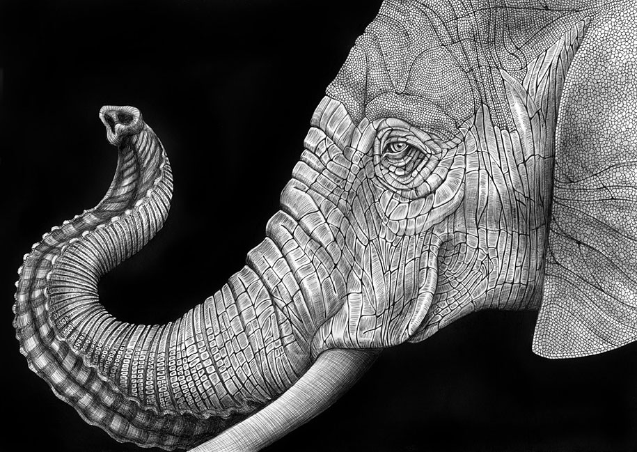 drawings of creatures 40 realistic animal pencil drawings of creatures drawings 1 1
