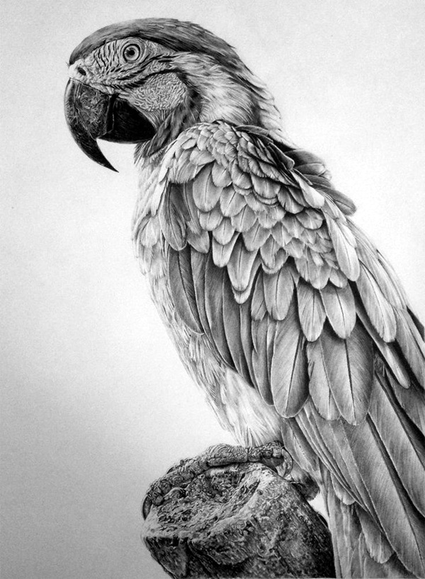 drawings of creatures 40 realistic animal pencil drawings of drawings creatures