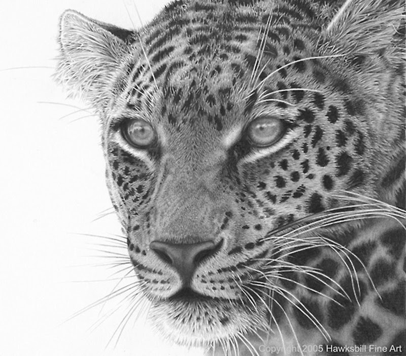 drawings of creatures 40 realistic animal pencil drawings of drawings creatures 1 1